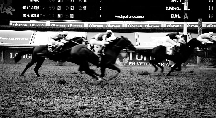 career, horses, racecourse, racing, track, horse, animal