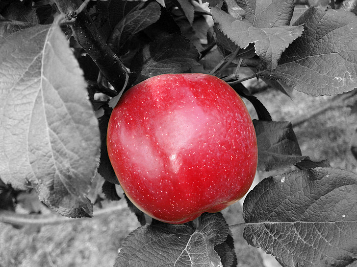 Apple, rojo, fruta, alimentos, saludable, Frisch, comer