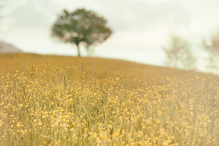 campo, Prado, natureza, Verão, árvore, grama, ensolarado