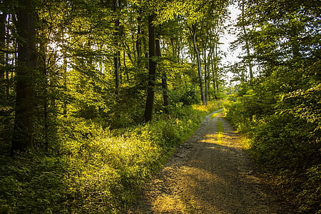 nature, summer, forest, trees, forest road, green, sun