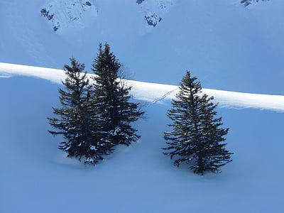 avets, zona dels arbres, coníferes, cobert de neu, hivernal, natura, llum
