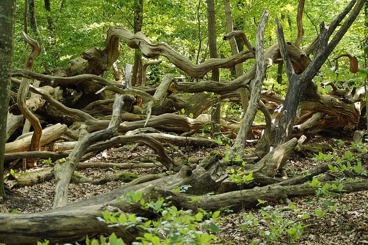 Foto Gratis Hutan Estetika Membusuk Pembusukan Alam Mati Kayu Mati Hippopx