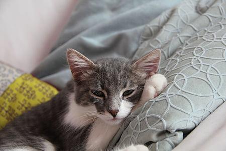 котка, Gatta, мяо, котка нос, портрет на котка, котешки, котки