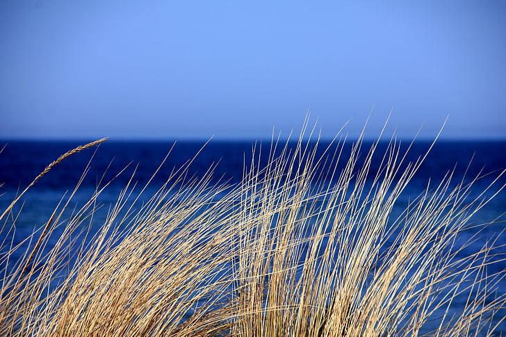 Mar, l'aigua, blau, herba, dunes, herba de marram, natura