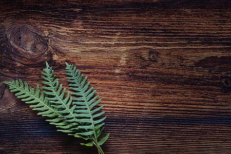 Fern, kleine fern, groen, plant, hout, bruin, sluiten