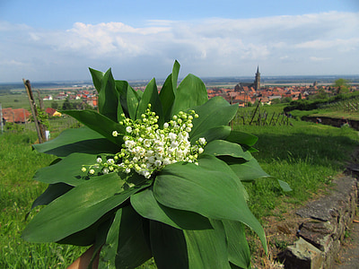 lily of the valley, flowers, muget, spring, landscape, village