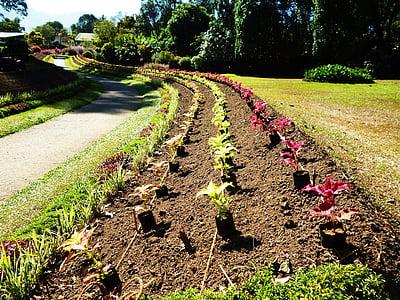 flowerbed, flower-bed, flower bed, leading line, flowers, flower road