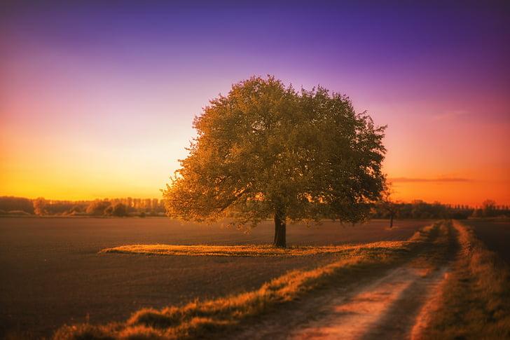 árvore, paisagem, em silêncio, pôr do sol, arrebol, colorido, natureza