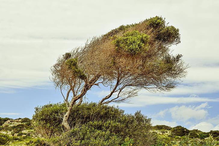 árvore, céu, nuvens, paisagem, natureza, Primavera, cenário