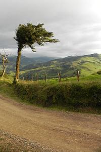 tree, landscape, costa rica, mountain, vegetation
