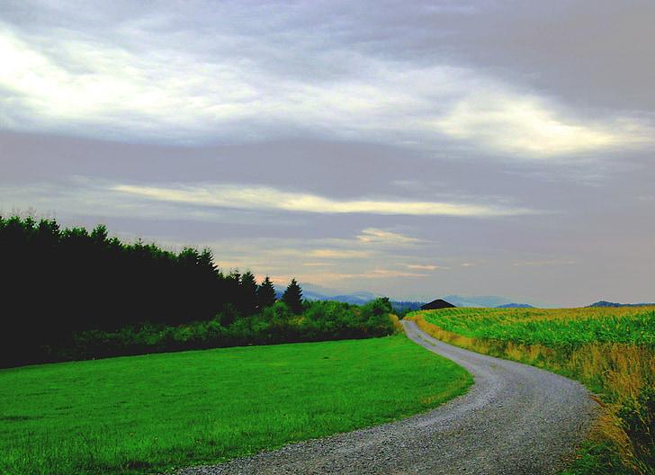 paysage, plateau, suite, champs, nature, domaine, Meadow