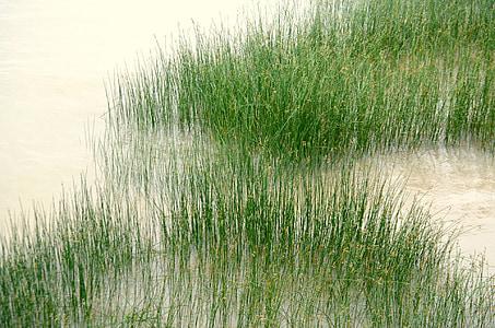 våtmarker, Bank, elven, myr, myr, myr, natur