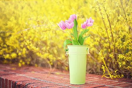 Пролетни цветя, Forsythia, жълто, лалета, розов лалета, Пролет, цветове