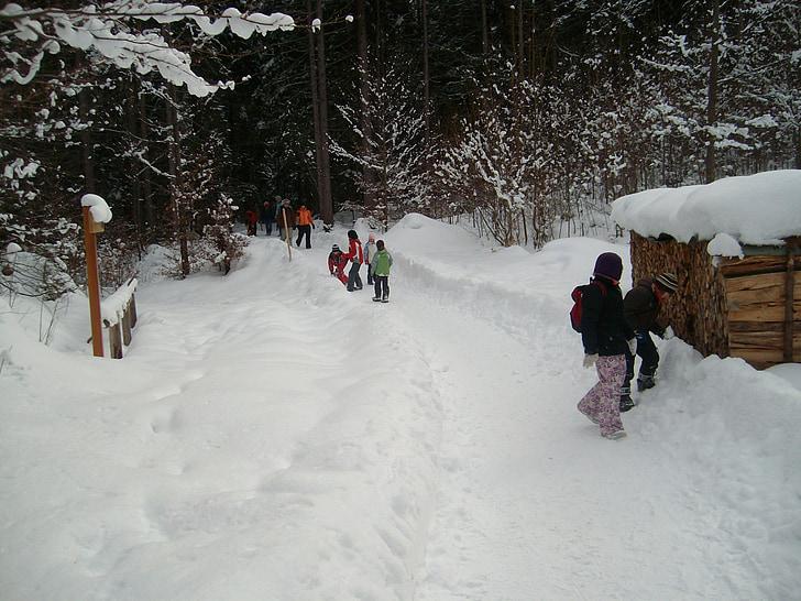 눈, 숲, 겨울, 겨울, 눈 덮인, 눈이, 조 경