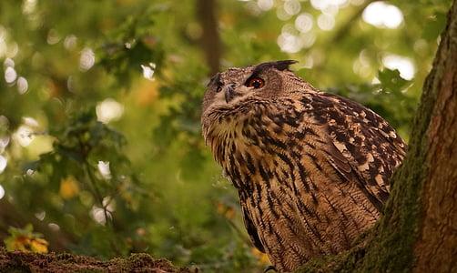 독수리 올빼미, 깃털, 숲, 새, 빌, 보기, 랩 터