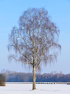 strom, osamělý, bříza, Příroda, sníh, krajina, odpočinek