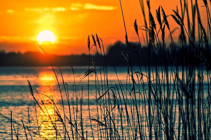 Göl, sazlık, günbatımı, manzara, doğa, sahne, plaj