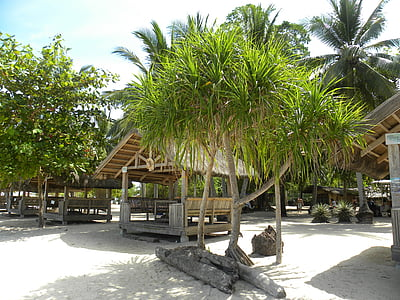 Pondok pantai, pohon palem, Pantai, Asia, Palms, bambu