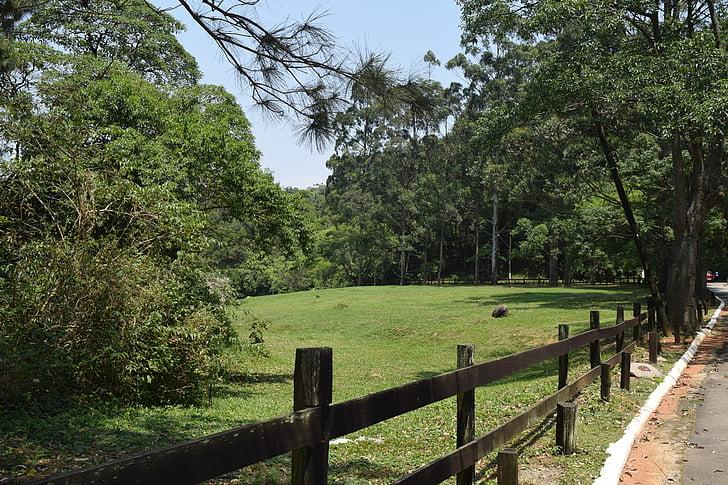 pīle, putni, ekoloģija, DOM, lauku zonu, parks