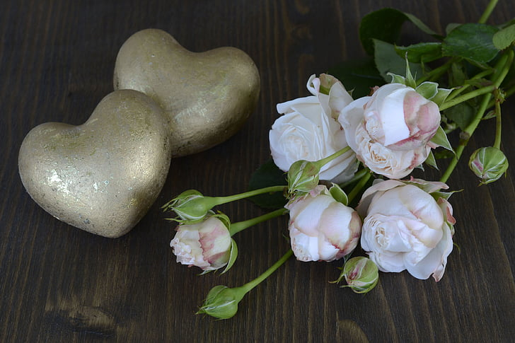 Roses, salmó, flor rosa, flor, romàntic, l'amor, fragància