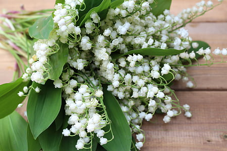 flowers, konwalie, white lilies of the valley, nature, beauty, spring, a small bunch