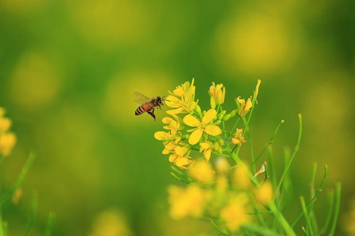 mesilane, õli menüü, Quentin chong