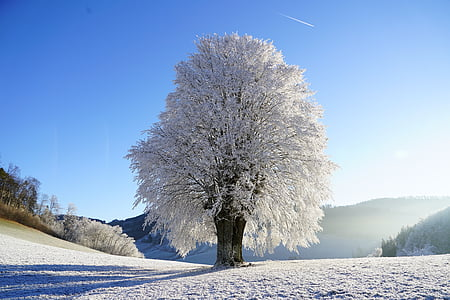 wintry, tree, hoarfrost, branch, iced, crystal formation, snowy