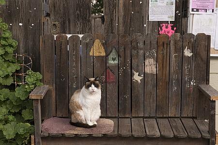 cat, bench, feline, looking, cute, sitting, outdoors
