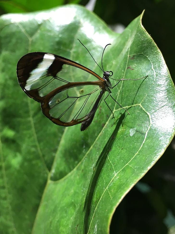 fjäril, naturen, Wing