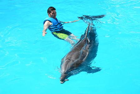 Delfiinit, meressä, kala vedessä, Oceanic, kala, Nisäkkäät, Näytä