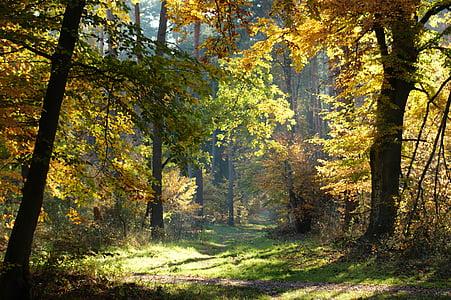Sonbahar, Orman, ağaçlar, uzakta, doğa, yaprakları, sonbahar renk