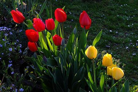 tulbid, lilled, Tulip mere, Meri lilled, blütenmeer, kollane, punane