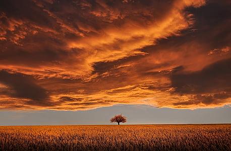 marrom, três, médio, culturas, fazenda, nublado, céu