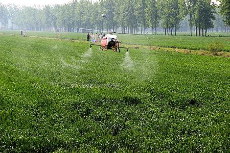 pšenice, UAV, preprečevanje bolezni