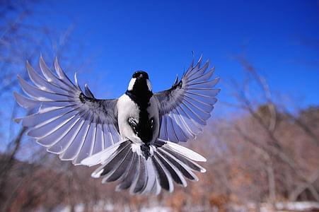 нощни птици, нов, крило, птици, в момента, животните, небе