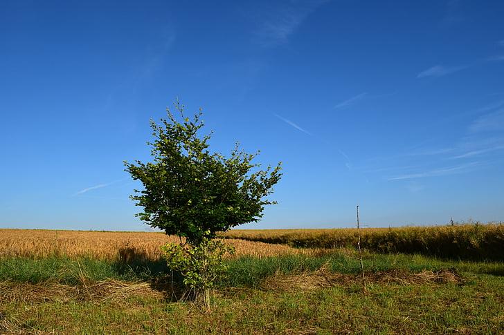 väljad, põllumajandus, loodus, teravilja, maastik, suvel, Horizon
