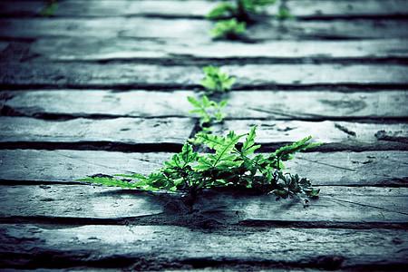 kameň, Zelená, rastlín, jar