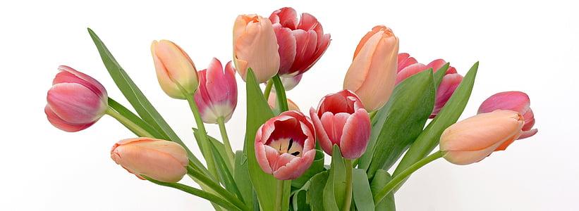 Tulipani, fiori, albicocca, rosa, natura, primavera, risveglio di primavera
