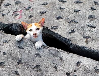 cat, cute, stuck, pets, kitten, cats, animals