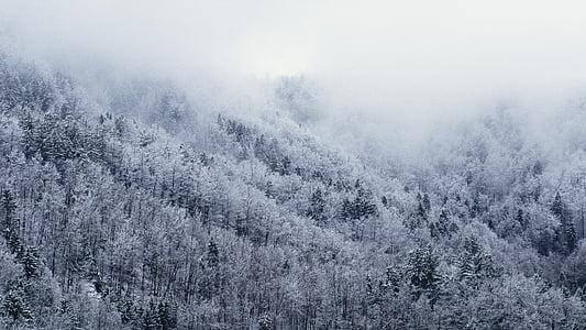 hideg, köd, erdő, hó, fák, fehér, téli