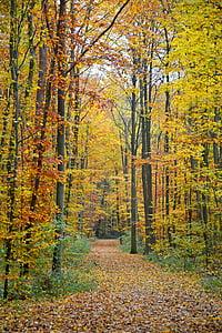 Sonbahar, sonbahar orman, Orman, orman yolu, ağaçlar, sonbahar yaprakları, Altın sonbahar