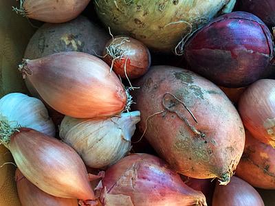 zelenina, cibuľa, cesnak, zeler, jedlo, rastlinné, čerstvé