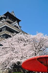 cirera, primavera al Japó, cirerer, cirerer, flor del cirerer, flor de Japó, Rosa