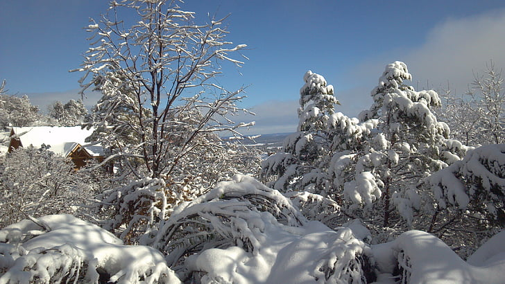 snowscape, pozimi, čarobno zimsko, zimske sanje, pozimi grmovje, zimski, zimsko razpoloženje
