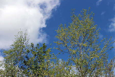 sky, clouds, blue, white, green, trees, branches