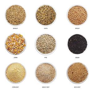 trigo, uma vez, sucata, colza, cevada, aveia, cereais