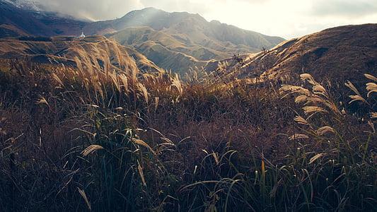 oblaky, tráva, Príroda, pohorie, hory, Príroda, lúčov
