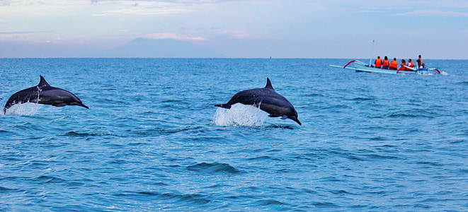 Delfini, Ocean, vode, skoki, prosto živeče živali, Marine, skok