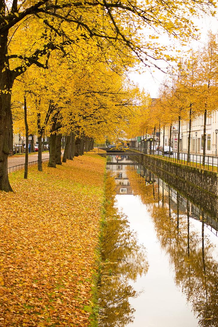 jeseň, listy, Zlatá jeseň, Lístie pádu, Príroda, farby jesene, listy na jeseň