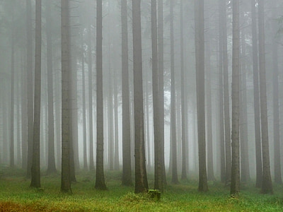 forest, the fog, hiking trail, mysterious, tree, magical, mystery